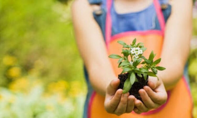 RESPETAMOS Y CUIDAMOS LAS PLANTAS